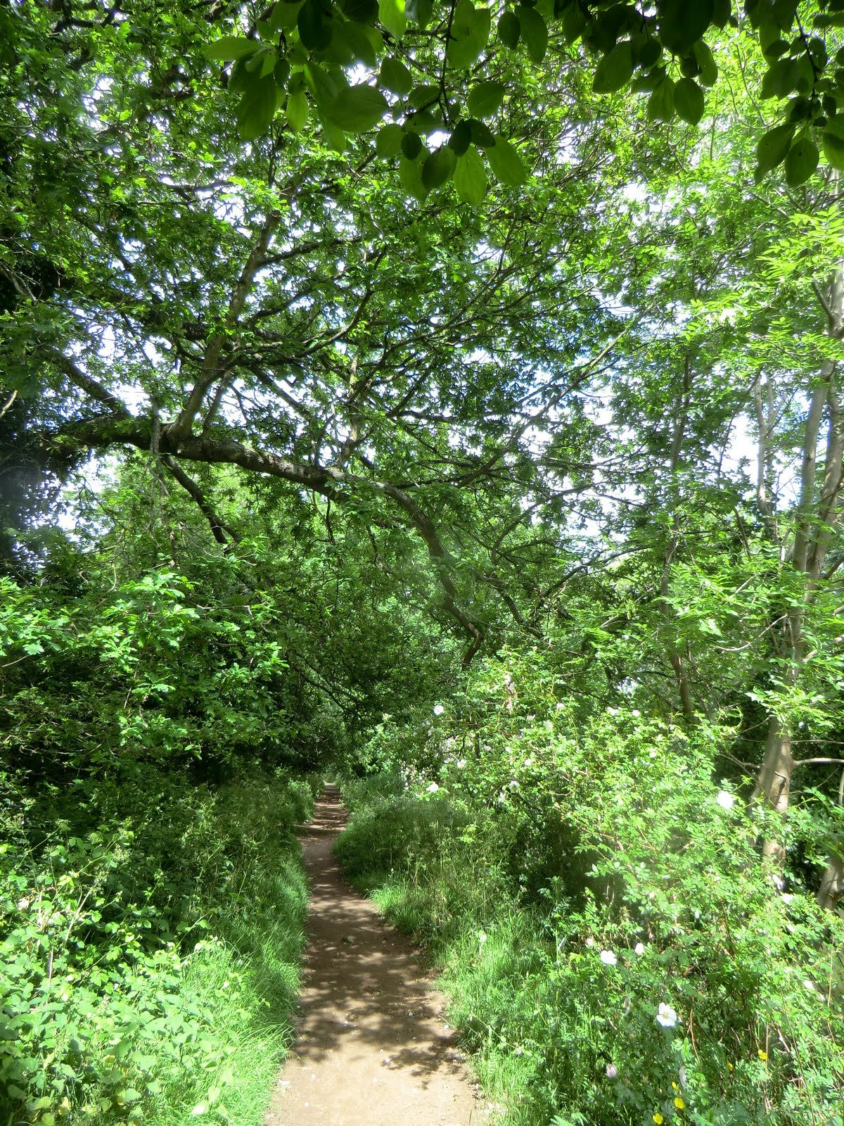 CIMG8596 Riverside path, Haysden Country Park