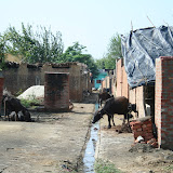 Village Scenes in Amarpurkashi and Local Area