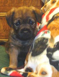 Cute as a bug!Mardi puppy