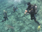 Montacto: divers on their safety stop