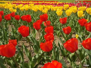 110416花ファンタジア