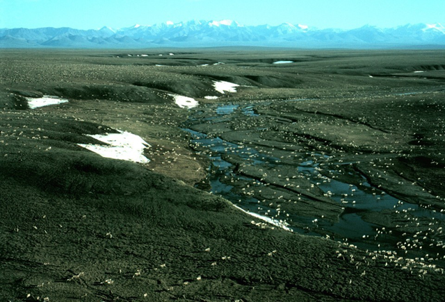 Aerial view of a porcuine-caribou herd in the 1002 area of the Arctic National Wildlife Refuge coastal plain, with the Brooks Range mountains in the distance to the south. Photo: U.S. Fish and Wildlife Service