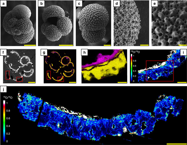 Foraminifera tests after isotope re-equilibration experiments. a–e SEM images showing the overall morphologies and ultrastructures of the foraminifera tests (G. bulloides) after their ultrasonic cleaning in pure ethanol. f Backscattered SEM image of a polished section of a test embedded in epoxy. g, h EDXS maps showing the spatial distributions of carbonates (Ca appears in yellow) and clays (Si appears in pink). i, j NanoSIMS maps showing the 18O/16O ratio distributions in carbonates and clays. Carbonates exhibit a 18O/16O ratio ranging from 0.1 to 0.8, while clays exhibit a 18O/16O ratio ranging from 0.9 to greater than 1.0. Note that the isotope exchange occurred very heterogeneously, leading to areas that are more or less enriched in 18O. The red rectangles in f, g indicate the locations of i, j. The red rectangle in i indicates the location of h. Scale bars are 100µm (a, b, f, g), 50µm (c), 20µm (d, i) and 10µm (e, h, j). Graphic: Bernard, et al., 2017 / Nature Communications