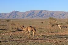 Maroko obrobione (182 of 319).jpg