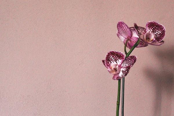 orchiDEA. di veronica df