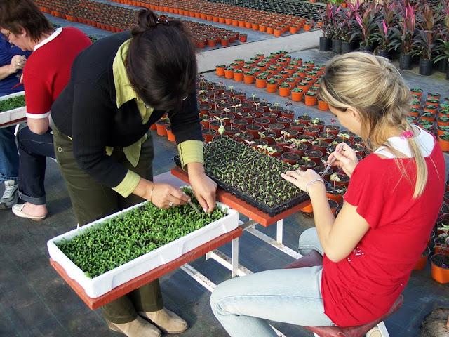 cultivo de plantas florales anuales - backup%2Bcamara%2B143.jpg