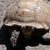 Houston Zoo - 116_8445.JPG