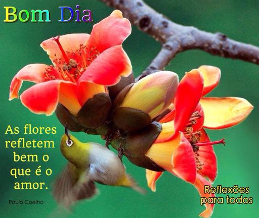 Reflexões Para Todos Bom Dia Flores E Amor