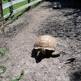 Houston Zoo - 116_8444.JPG