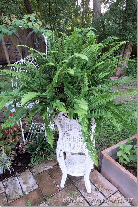 Kimberly Fern