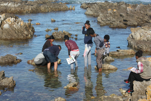 2Oceans Gansbaai Marine Sciences Project Outing