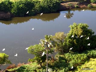 Une vue aérienne du Parc d'Upemba dans la province du Katanga
