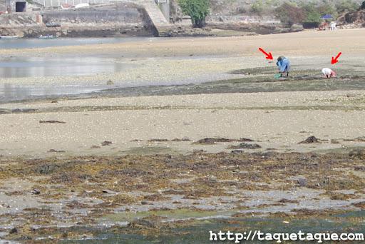 Mariscadores furtivos en la ría de Santa Cristina, Oleiros (La Coruña)