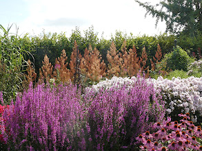 Photo: Phlox - Echinacea - Papaver Rhoecas//RHS gardens Wisley