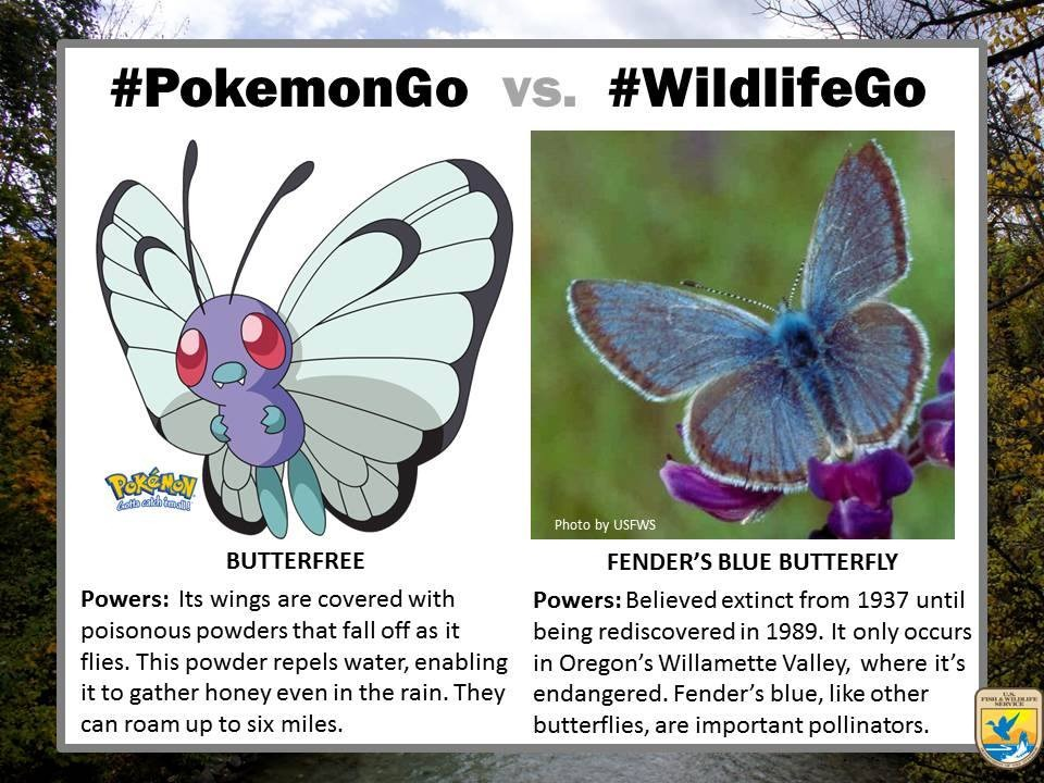 pokemongo-vs-wildlifego-12