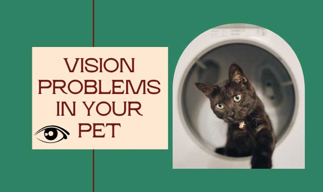 How to Test a Cat's Vision