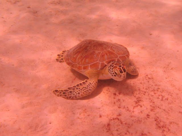Bonaire 2011 - PICT0012.JPG