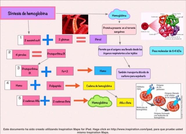 Will Metabolismo y nutricion Alguna vez muere
