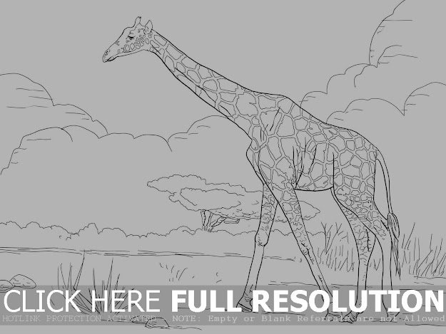 Giraffe Forage On Land Field Coloring Picture For Kids