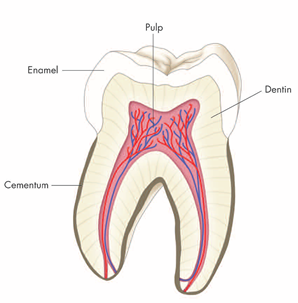 Age changes in Enamel Dentin and Pulp-Dental Books