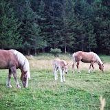 Kamnik–Savinja Alps - Vika-02980.jpg