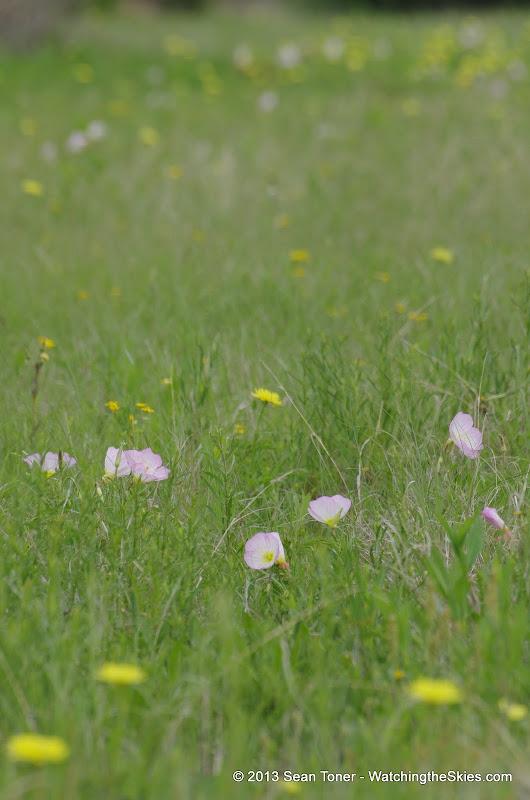2013 Spring Flora & Fauna - IMGP6372.JPG