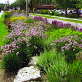 Median planting with perennials and ornamental grasses