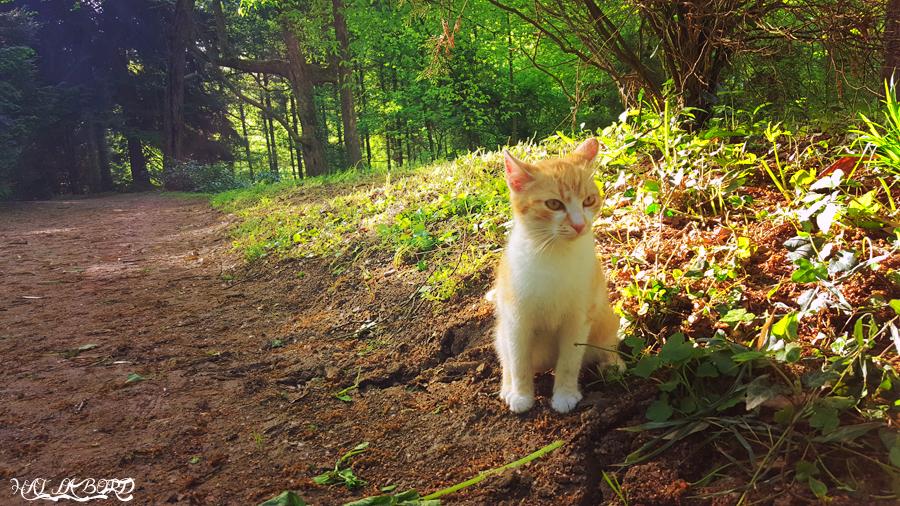 pisica parc simeria