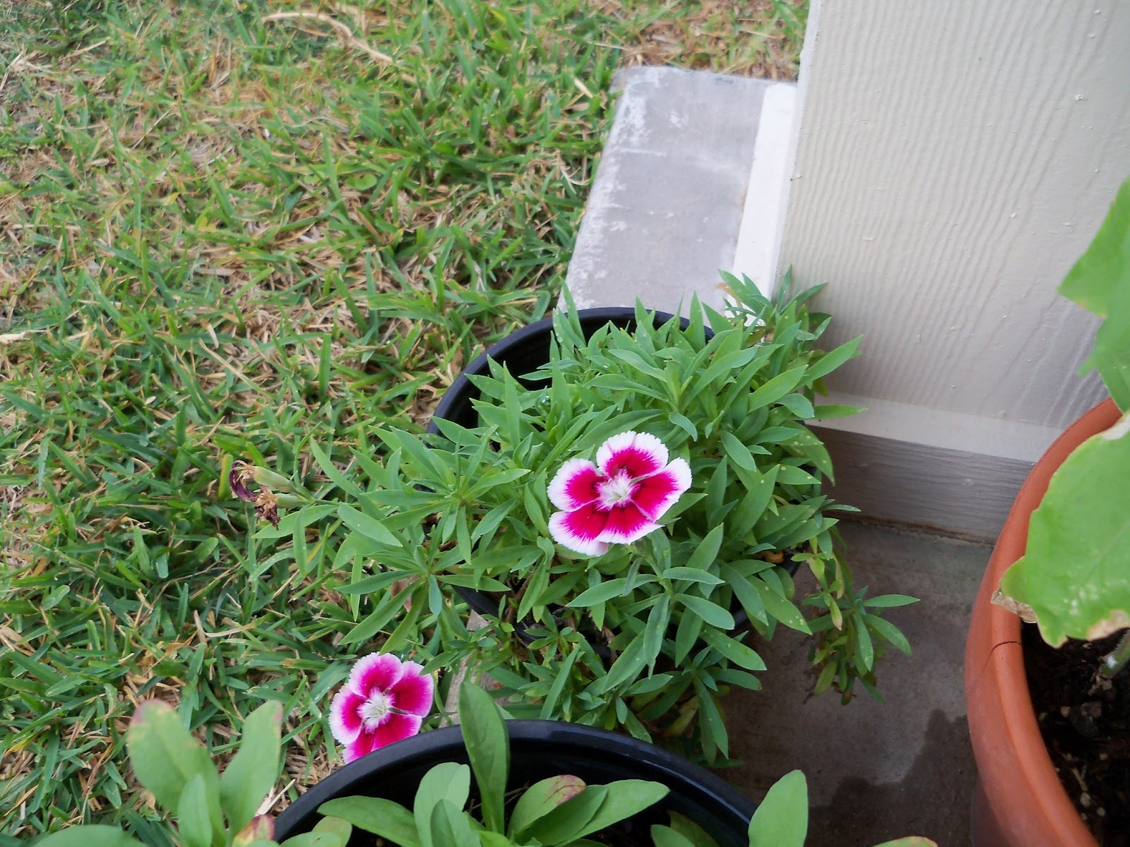 Gardening 2011 - 100_8972.JPG