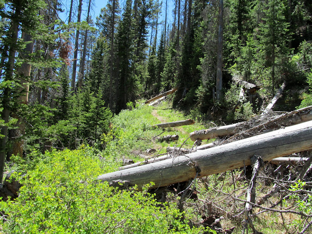 Old logging road that probably connects to Mill Canyon
