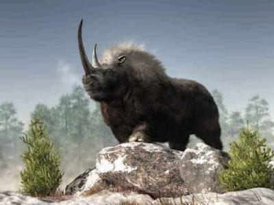 गैंडा से जुड़े 10 रोचक तथ्य!   10 Interesting Facts About Rhinoceros