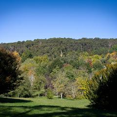 2011 04 25 Mt Lofty Botanic Garden - IMG_6649.jpg