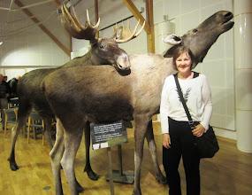 Photo: Hirviä näimme vain museossa Altassa