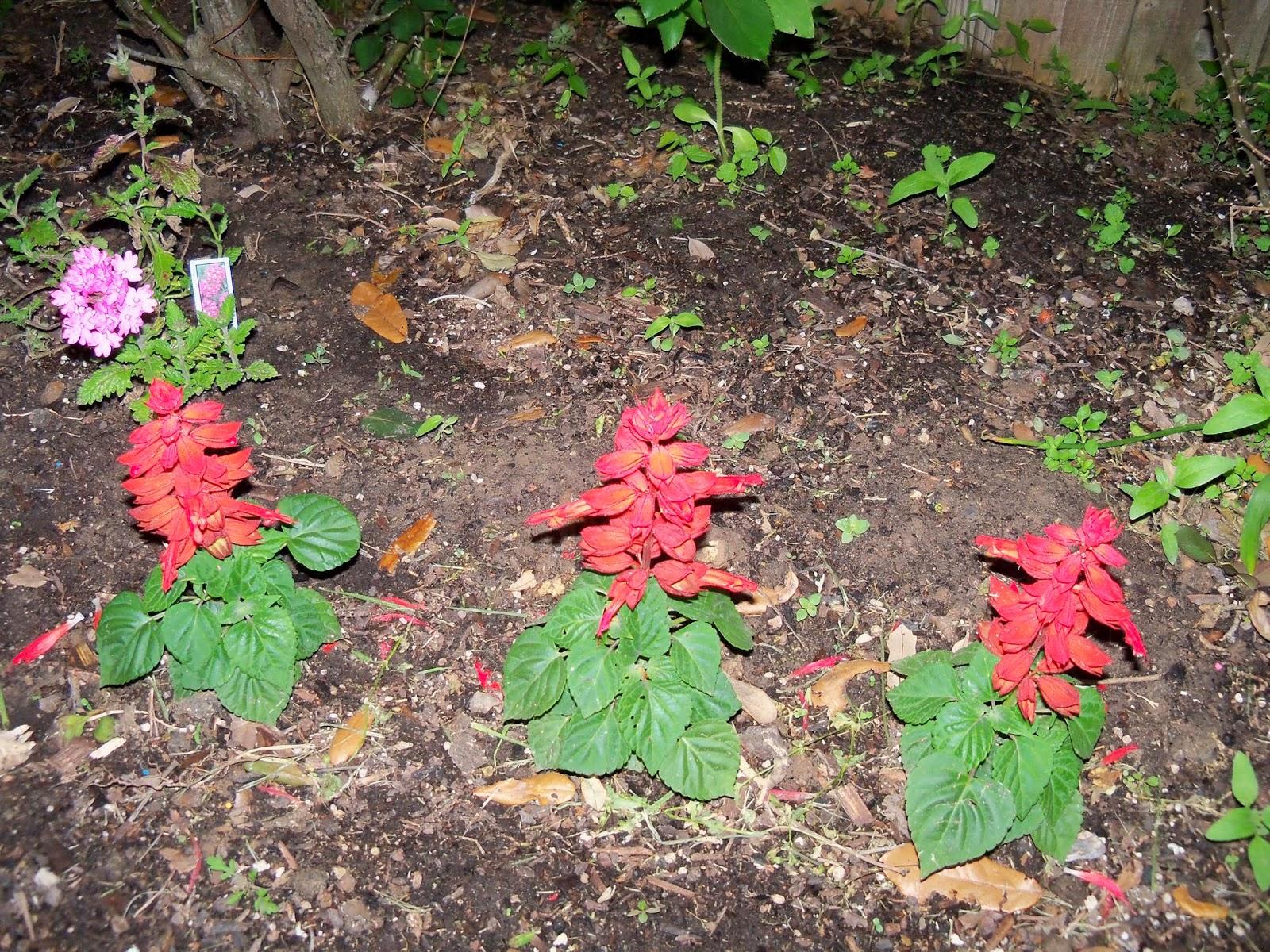 Gardening 2014 - 116_1134.JPG