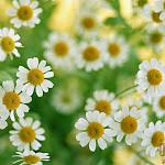 Flower 043_1280px.jpg