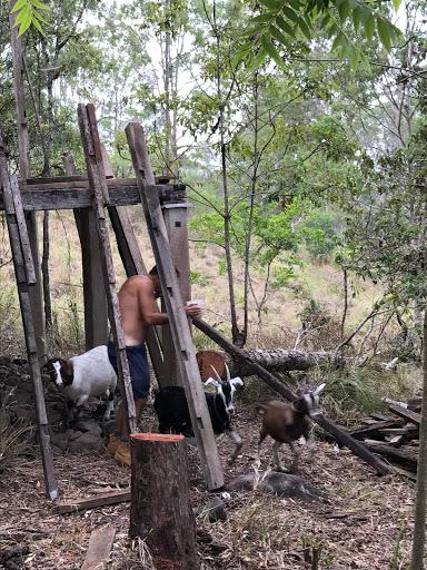 barn-goats-2017-03-9-06-00.JPG