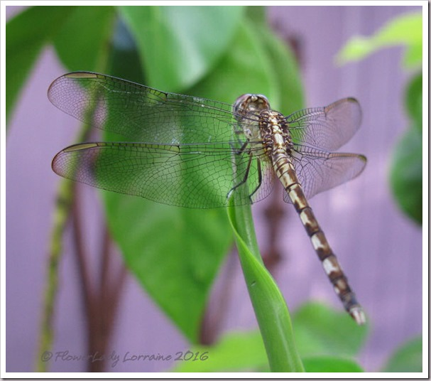 10-13-dragonfly