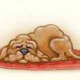 sleeping-dog.jpg
