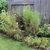 Gardening 2010, Part Three - 101_5161.JPG