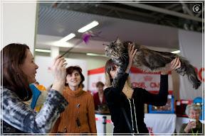 cats-show-24-03-2012-fife-spb-www.coonplanet.ru-093.jpg
