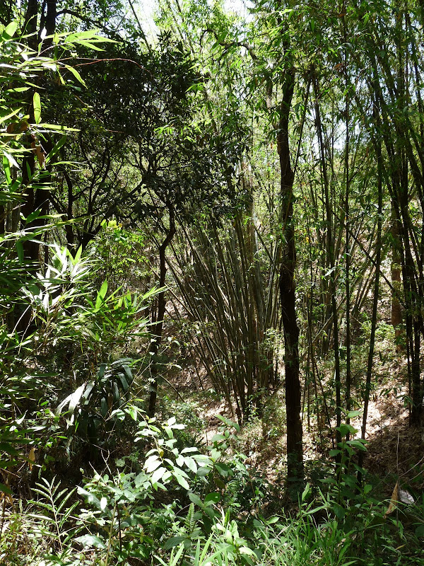 Chine: randonnée xishangbanna, région de Bada - Picture%2B795.jpg