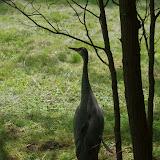 05-11-12 Wildlife Prairie State Park IL - IMGP1605.JPG