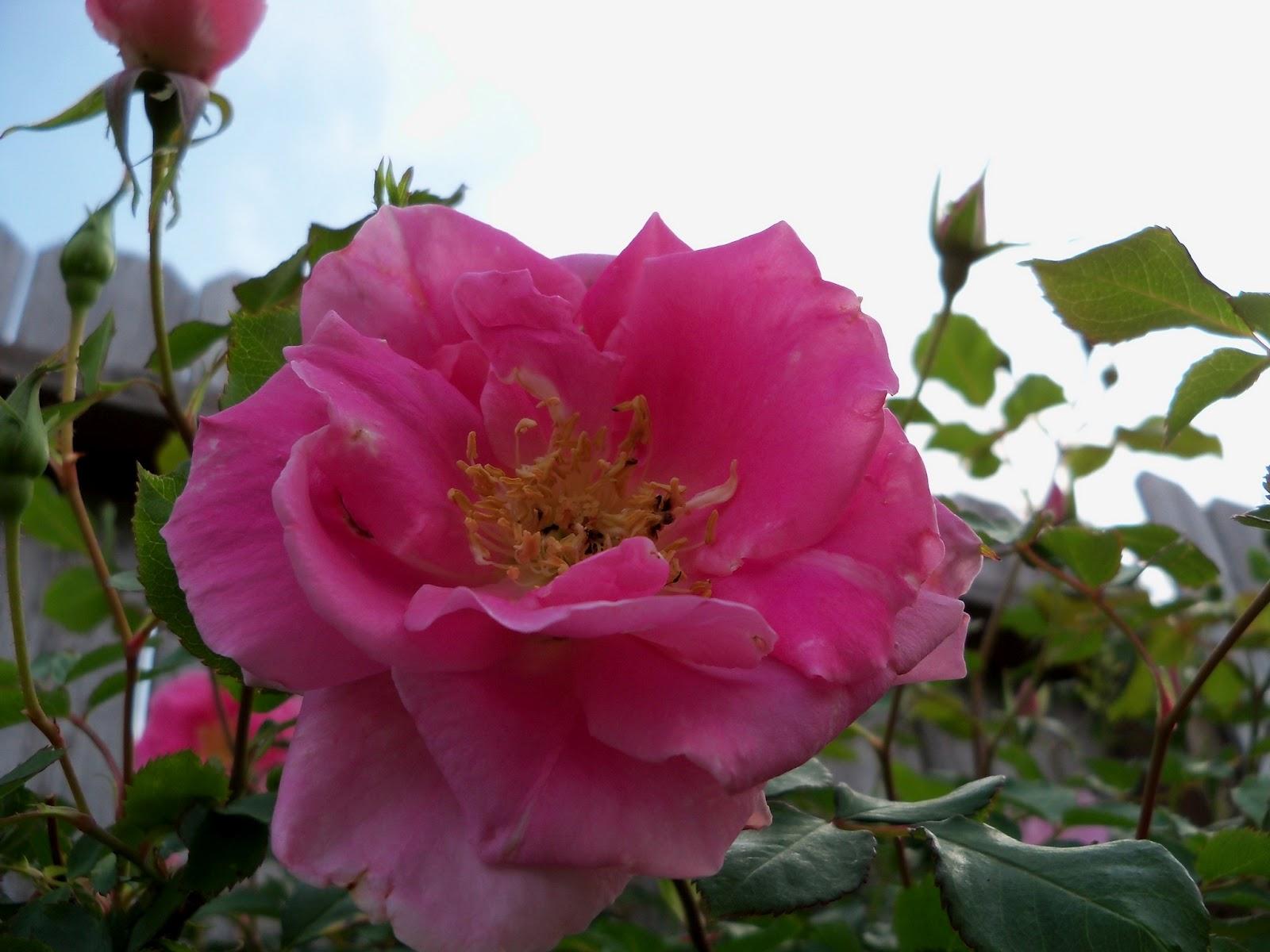 Gardening 2011 - 100_7152.JPG
