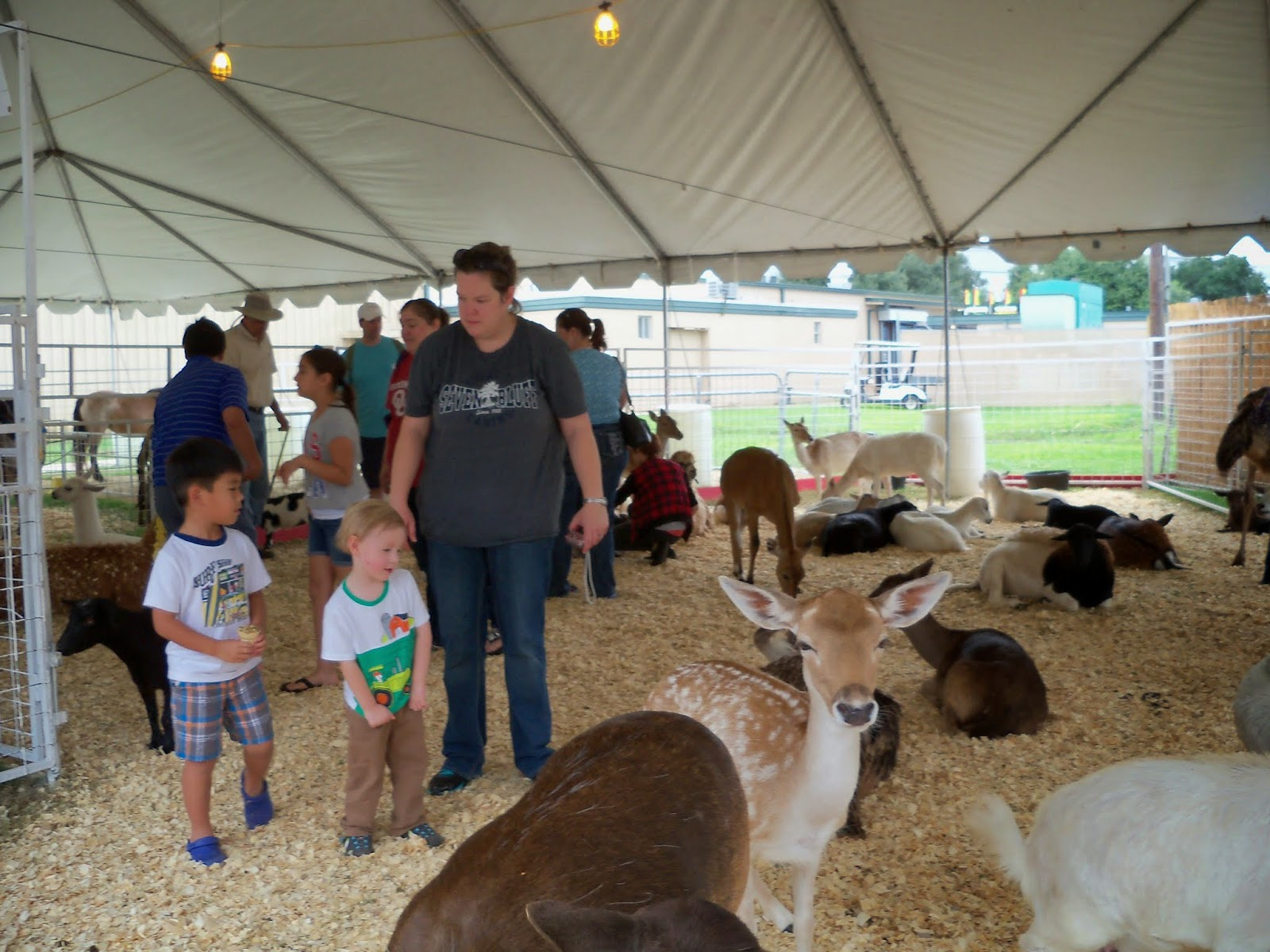 Fort Bend County Fair 2014 - 116_4324.JPG