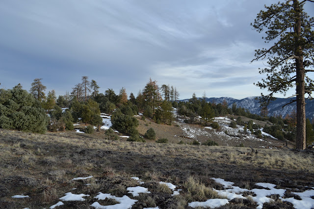 Brush Mountain and Mount Pinos