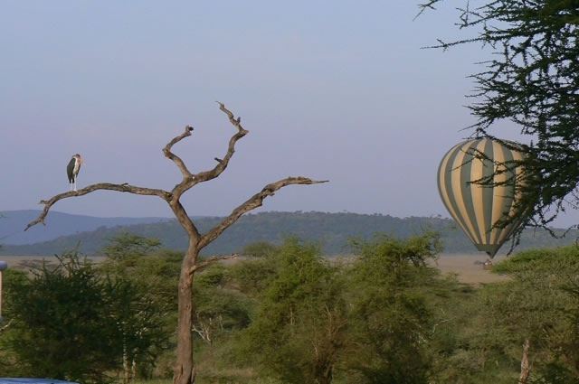 Early morning     balloon ride over the Serengeti