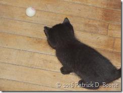 black kitten 03