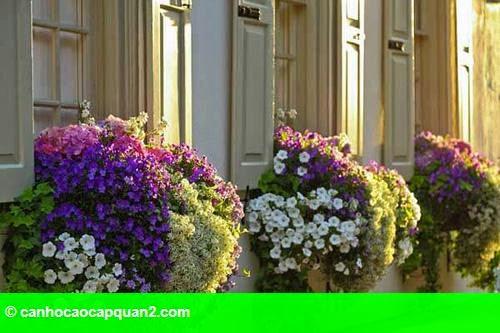Hình 5: Ban công nhỏ rực rỡ hoa lá