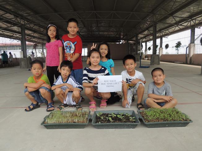 Những hình ảnh trồng rau sạch của học sinh KIDSMART