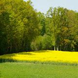 Champ de colza aux Hautes-Lisières : 25 mars, 20 avril et 8 mai 2011. P¨hoto : J.-M. Gayman